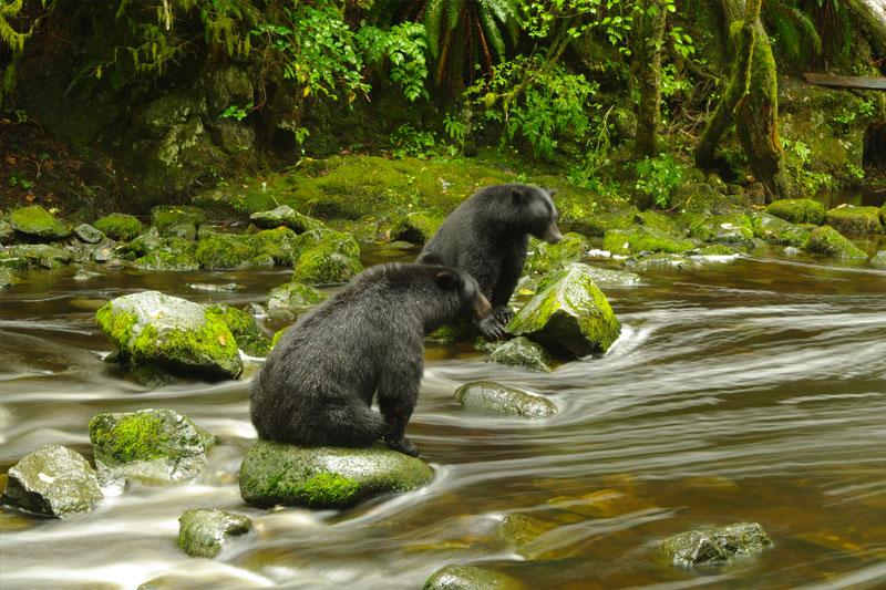 bears-whales-ucluelet-2