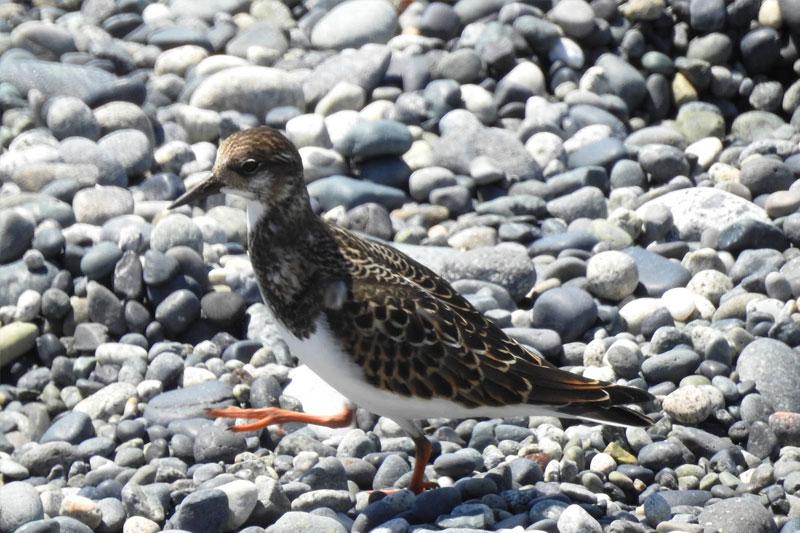 birds-ucluelet-2